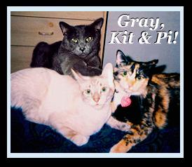 Pi, Kit, and Gray!